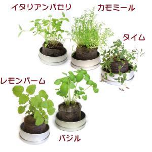 人気のハーブを5種類そろえました。 種と説明書・土が入ってます。土は圧縮乾燥されてますので水分で膨ら...
