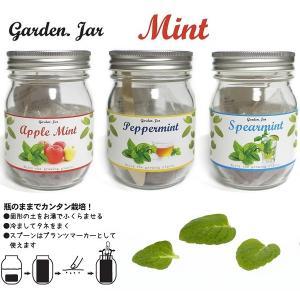 ガーデン・ジャー 3種類のミント   アップルミント スペアミント ペパーミント     花、ガーデ...