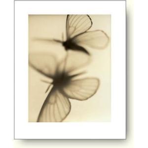 サンディー・フェルマン/Sandi Fellman/Butterflies 【フォトポスター】|artposters