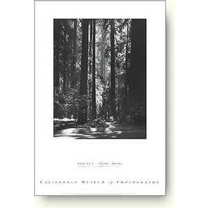 アンセル・アダムス レッドウッド, ファウンダース・グローブ州立公園 【写真ポスター】|artposters