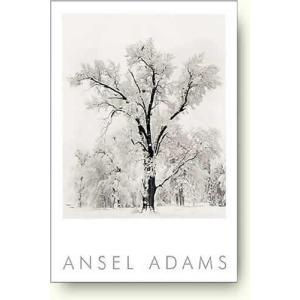 アンセル・アダムス 樫, 吹雪, ヨセミテ国立公園 1948年 【写真ポスター】|artposters