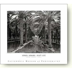 【フォトポスター】アンセル・アダムス パーム・グローブ, 1966年 Ansel Adams: Palm Grove, 1966|artposters