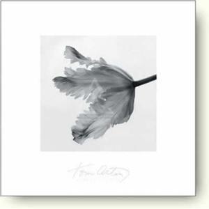 トム・アーティン Parrot Tulip II 【フォトポスター】|artposters