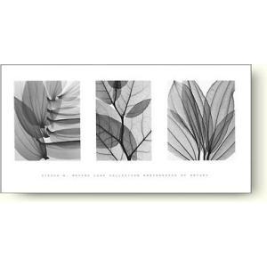 スティーブン・マイヤーズ(Steven Meyers) リーフ・コレクション(Leaf Collection) 【フォトポスター】|artposters