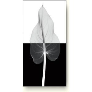 スティーブン・マイヤーズ(Steven Meyers) カラー・リーフ II (Calla Leaf II) 【フォトポスター】|artposters
