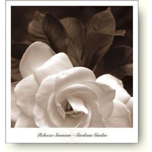 レベッカ・スワンソン(Rebecca Swanson) Gardenia Garden 【フォトポスター】|artposters