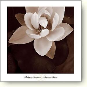 レベッカ・スワンソン(Rebecca Swanson) Amazon Lotus 【フォトポスター】|artposters