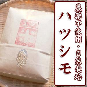 平成29年産 自然栽培米 ハツシモ 玄米(精米無)農薬不使用 無肥料 1kg|arumama