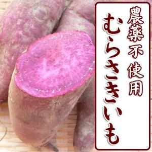 紫芋 むらさき芋 不揃い 土付き 1kg arumama