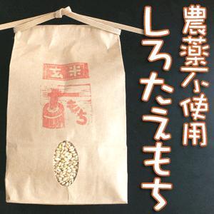 平成29年産 もち米 しろたえもち(白米) 農薬不使用 ありがとんぼ農園 1kg|arumama