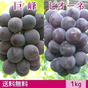 巨峰&ピオーネ ぶどう 送料無料 ギフト 1kg|arumama