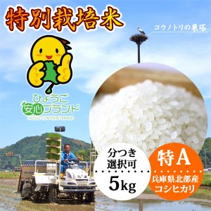 新米 お米5kg コシヒカリ 玄米 白米 特別栽培米 有機肥料 兵庫県産 当日精米|arumama
