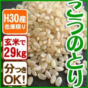 【在庫限定・H30年産】玄米 29kg 白米コウノトリ米 送料無料 当日精米|arumama