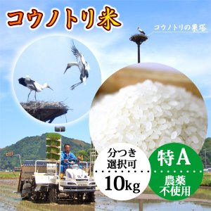 新米 令和元年産 玄米(精米無)農薬不使用 白米 コウノトリ米 10kg 当日精米|arumama