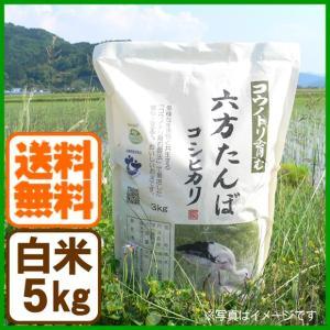 新米 コシヒカリ 令和元年産 白米 5kg コウノトリ育む農法 送料無料 お米 兵庫県産|arumama