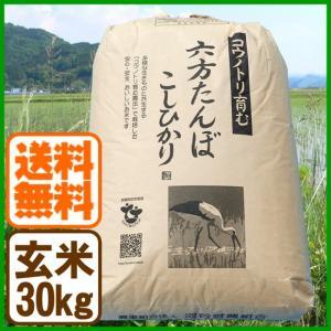 新米 コシヒカリ 令和元年産 玄米 30kg こうのとり米 送料無料 兵庫県産|arumama