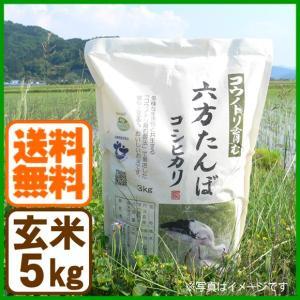 新米 コシヒカリ 令和元年産 玄米 5kg こうのとり米 送料無料 兵庫県産|arumama