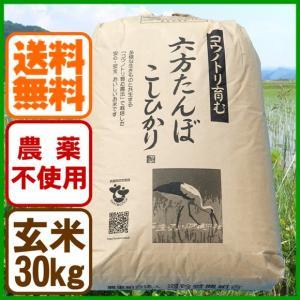 【平成29年産】玄米 農薬不使用 コシヒカリ30kg こうのとり米 送料無料 兵庫県産|arumama