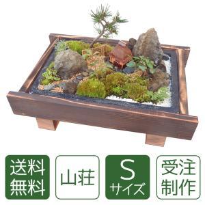 盆栽 ギフト 送料無料|arumama