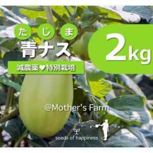 青ナス 青那須 農薬90%カット 特別栽培【2kg】|arumama