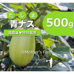 青ナス 青那須 農薬90%カット 特別栽培【500g】|arumama