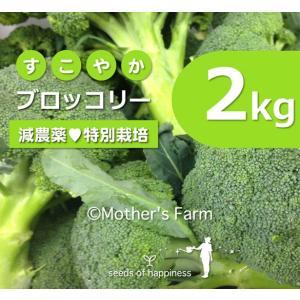 ブロッコリー 農薬90%カット 特別栽培【2kg】