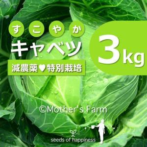 キャベツ 農薬90%カット 特別栽培【3kg】|arumama