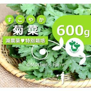 菊菜  きくな 春菊 農薬90%カット 特別栽培【600g】 arumama