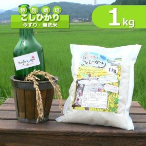 【新米予約】無洗米 コシヒカリ 玄米 白米 1kg 今ずり米 兵庫県 但馬産|arumama