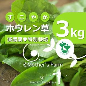 ほうれん草 ホウレン草 農薬90%カット 特別栽培【3kg】|arumama