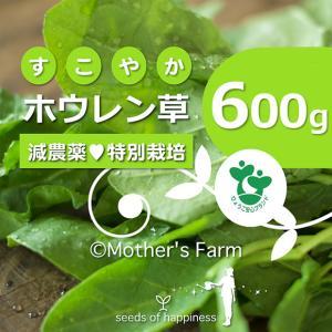 ほうれん草 ホウレン草 農薬90%カット 特別栽培【600g】|arumama