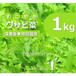 わさび菜 ワサビ菜 農薬90%カット 特別栽培【1kg】|arumama