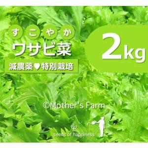 わさび菜 ワサビ菜 農薬90%カット 特別栽培【2kg】|arumama