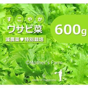 わさび菜 ワサビ菜 農薬90%カット 特別栽培【600g】|arumama