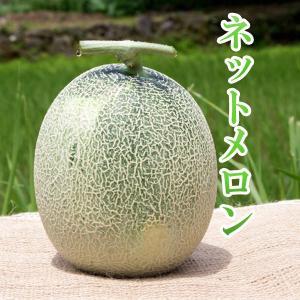 ムーンライト メロン 1玉 高糖度 農薬不使用 送料無料 arumama