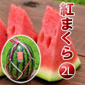 高糖度 大玉 スイカ 紅まくら(2L)神鍋高原 すいか 送料無料|arumama
