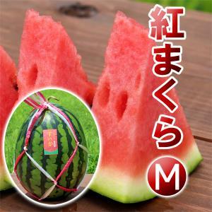 高糖度 大玉 スイカ 紅まくら(M)神鍋高原 すいか 送料無料|arumama