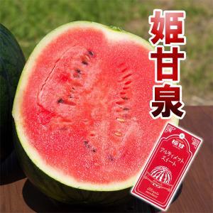 お中元 超高糖度 小玉 スイカ 姫甘泉ブラック 農薬不使用 すいか ギフト 送料無料|arumama
