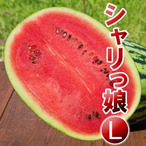 高糖度 小玉 スイカ シャリっ娘(L)農薬不使用 すいか 送料無料|arumama