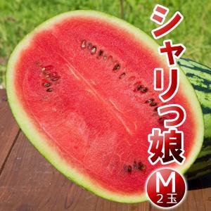 高糖度 小玉 スイカ シャリっ娘(M:2玉セット)農薬不使用 すいか 送料無料|arumama