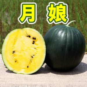 月娘 小玉 スイカ 農薬不使用 黄色い すいか 送料無料 arumama