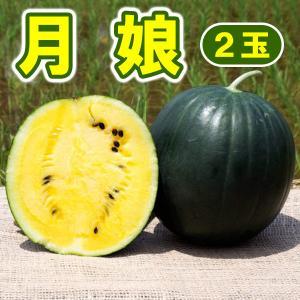 月娘 2玉 小玉 スイカ 農薬不使用 黄色い すいか 送料無料 arumama