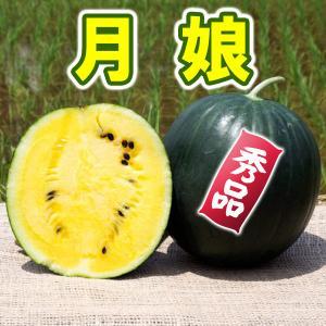 月娘 秀品 小玉 スイカ 農薬不使用 黄色い すいか 送料無料 arumama