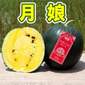 月娘 極甘 小玉 スイカ 農薬不使用 黄色い すいか 送料無料 arumama