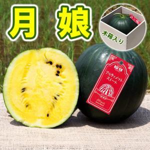 月娘 敬老の日 すいか 極甘(木箱入り)小玉 スイカ 農薬不使用 黄色い ギフト プレゼント 送料無料 arumama