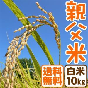 新米 コシヒカリ 10kg 白米 親父米 兵庫県産 令和元年産 送料無料|arumama