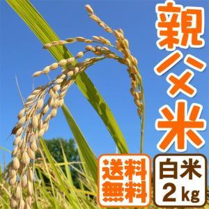 新米 コシヒカリ 2kg お米 白米 親父米 令和元年産 兵庫県産 送料無料|arumama