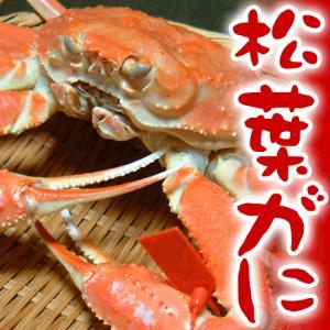 カニ かに 蟹 松葉がに 送料無料 松葉ガニ 3kg(3〜4杯)香住・柴山産|arumama