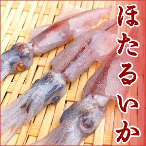 ホタルイカ(釜ゆで)香住柴山産の蛍烏賊を産地直送【1kg】ほたるいか arumama
