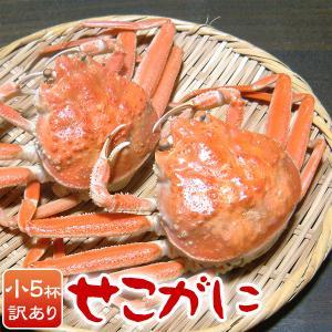 せこがに せいこがに カニ わけあり 訳あり せいこ蟹 セコ蟹(小)5杯 兵庫県 香住・柴山産 産地直送|arumama